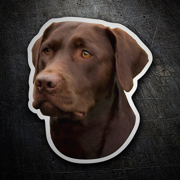 Aufkleber: Chocolate Labrador Retriever