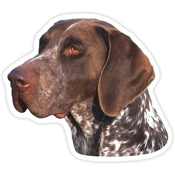 Aufkleber: German Shorthaired Pointer