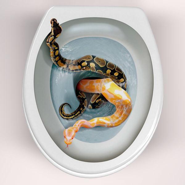 Wandtattoos: Schlangen kommen aus der Schüssel