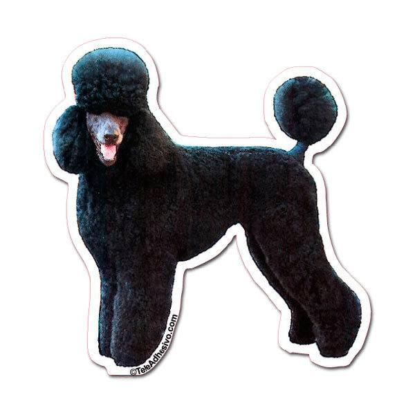 Aufkleber: Black Poodle