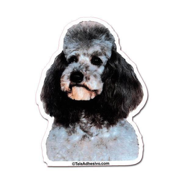 Aufkleber: Black Toy Poodle