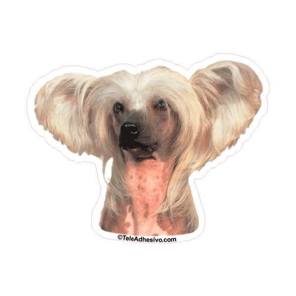 Aufkleber: Chinese Crested