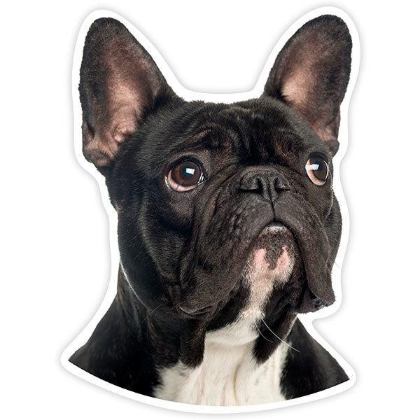 Aufkleber: French Bulldog