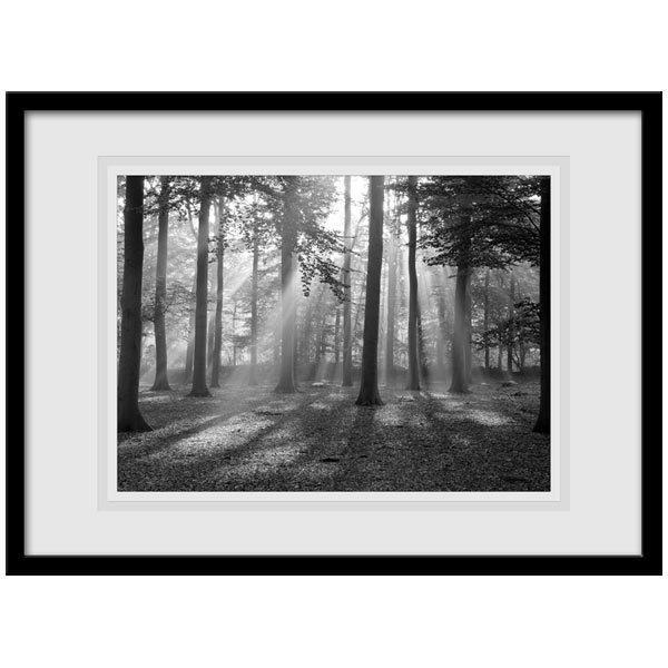 Wandtattoos: Wald Licht