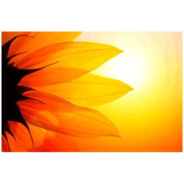 Fototapeten: Sunflower