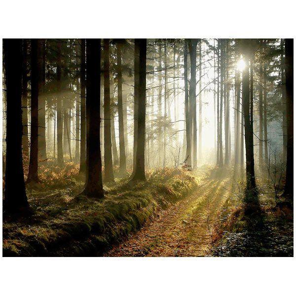 Fototapeten: Forest at Dusk