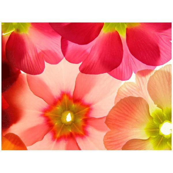 Fototapeten: Flores 21