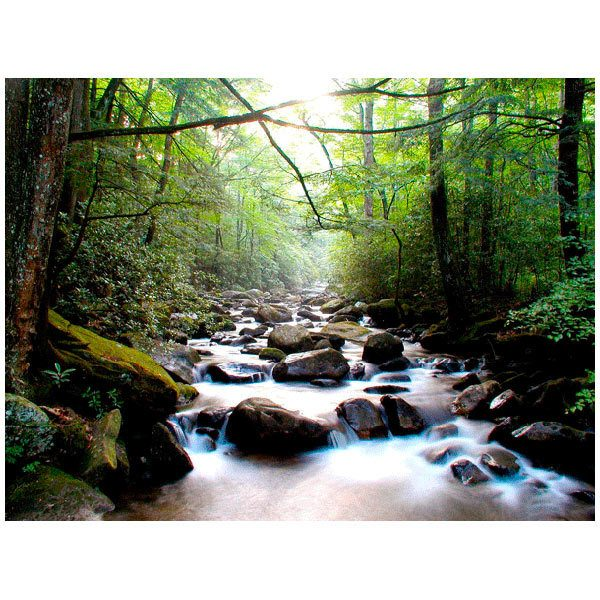 Fototapeten: Río en el bosque