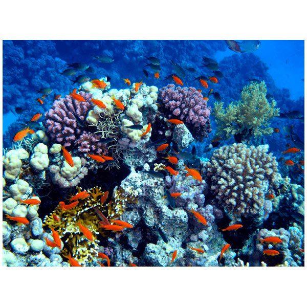 Fototapeten: Schwimmen in den Korallen