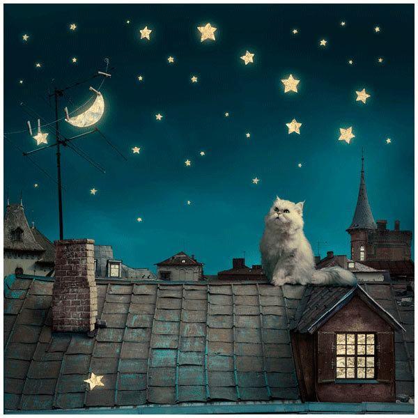 Fototapeten: Gato en el tejado