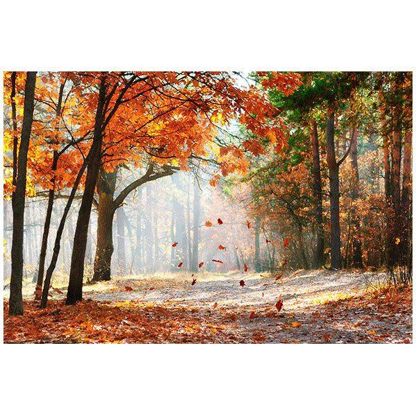 Fototapeten: Autumn Forest