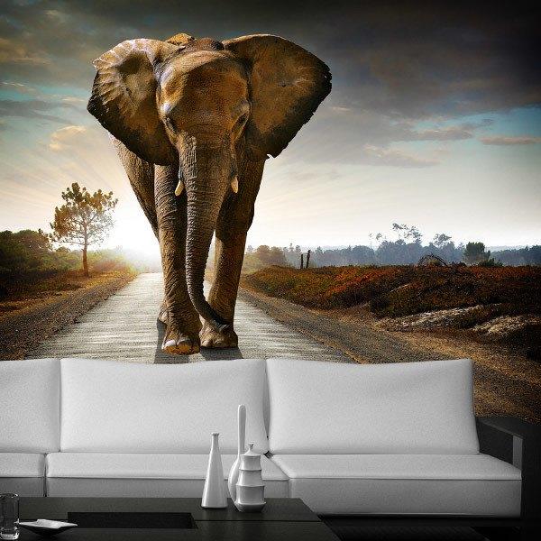Fototapeten: Elefant 0