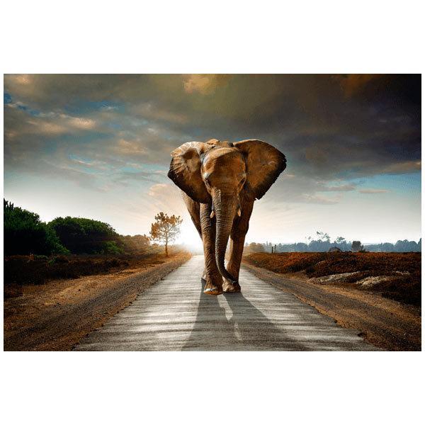 Fototapeten: Elefant