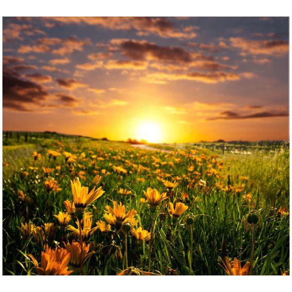 Fototapeten: Feld der Gänseblümchen