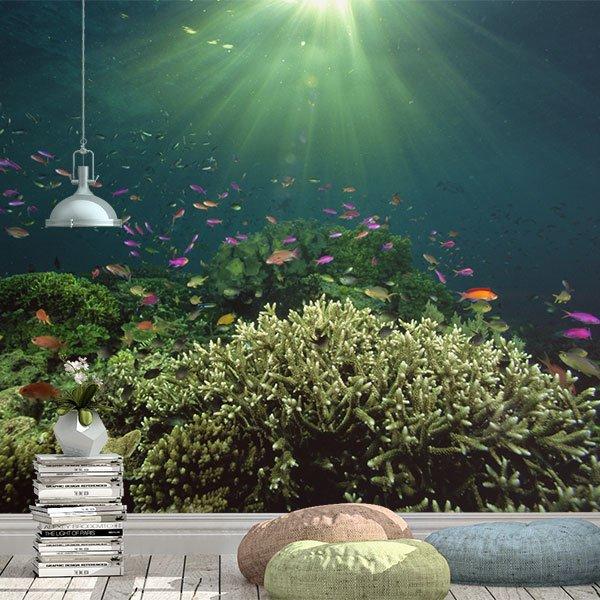 Fototapeten: Coral im Licht 0