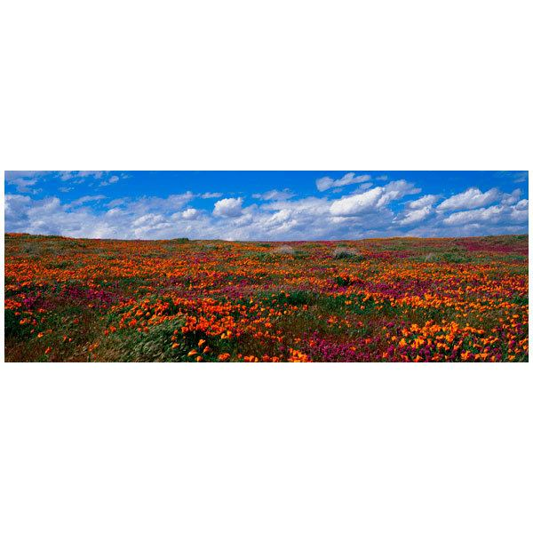 Fototapeten: Tulpenfelder