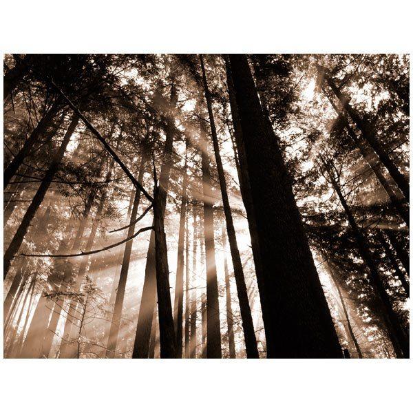 Fototapeten: Landschaft 68