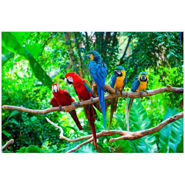 Fototapeten: Fünf Papageien