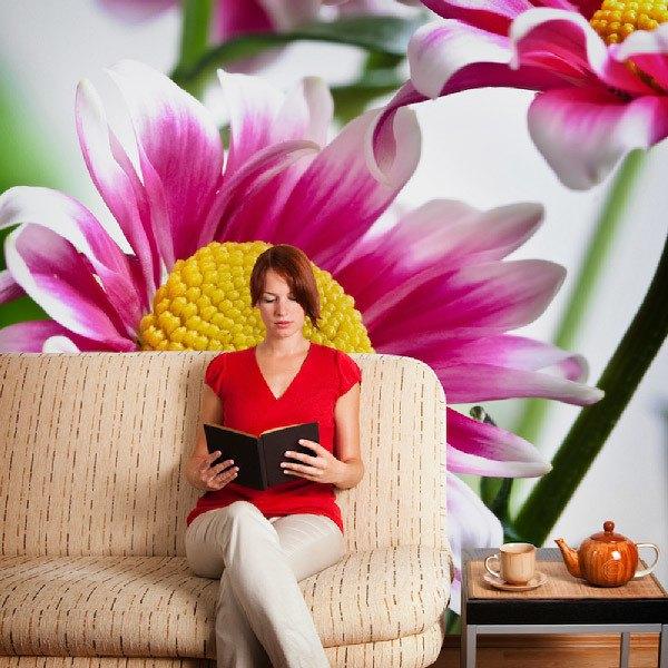 Fototapeten: Weiß und Rosafarbenes Gänseblümchen 0