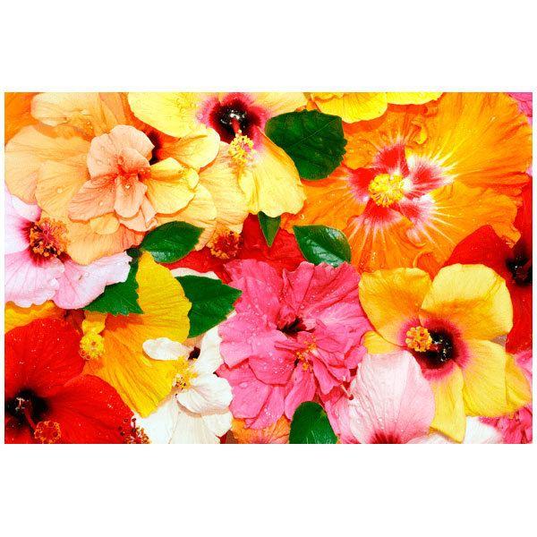 Fototapeten: Bunte Blumen