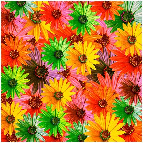Fototapeten: Blumen Pop