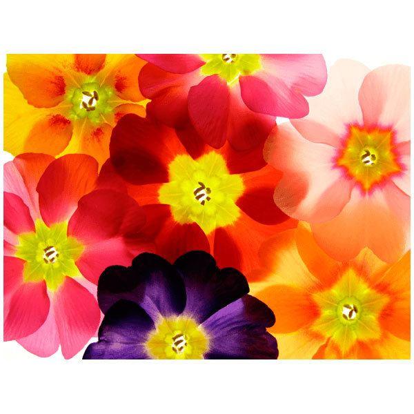 Fototapeten: Blumen 22