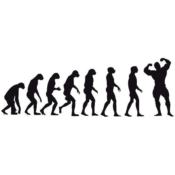 Wandtattoos: Evolution Muscle