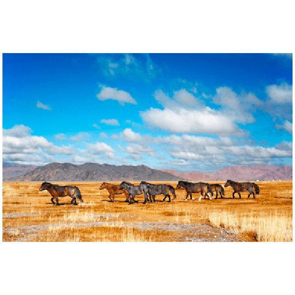 Wandtattoos: Pferde