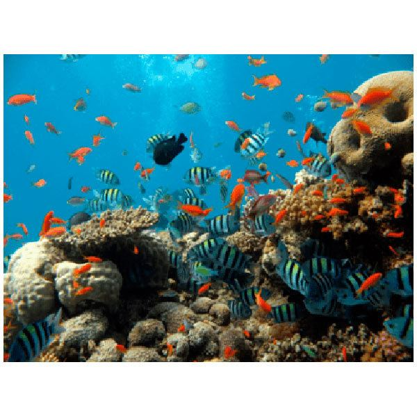 Wandtattoos: Boden des Meeres
