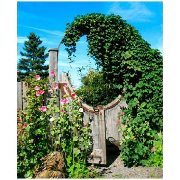 Wandtattoos: Garten