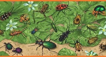 Wandtattoos: Bordüre Insekten