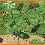 Wandtattoos: Bordüre Insekten 4