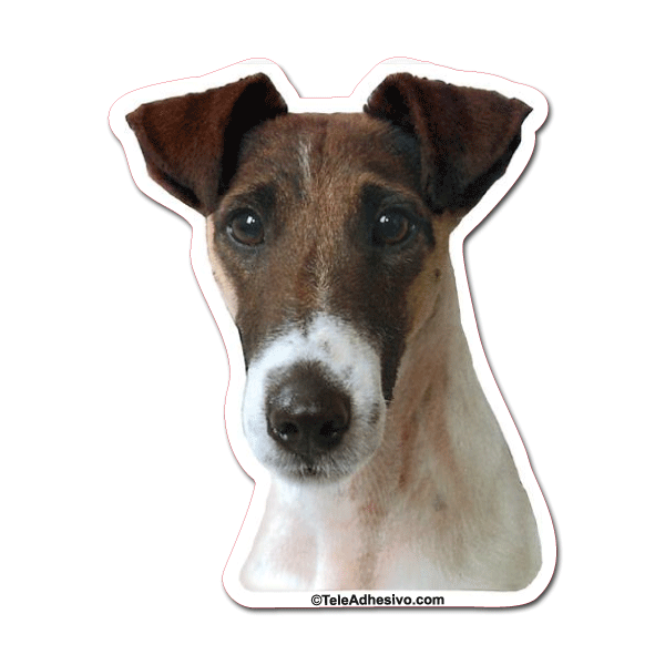Aufkleber: Smooth Fox Terrier