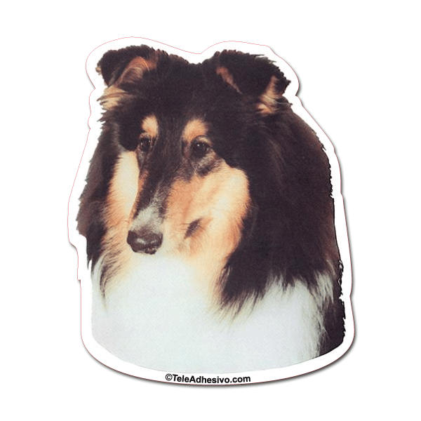 Aufkleber: Tri-color Rough Collie