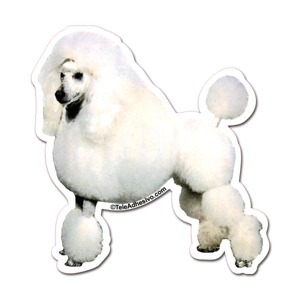 Aufkleber: White Poodle