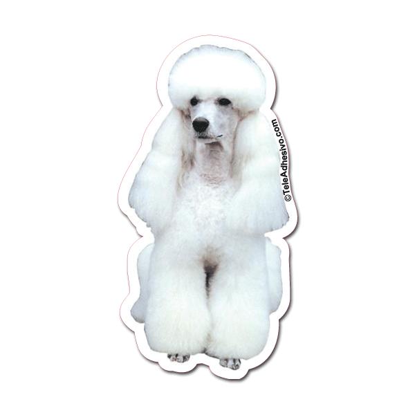 Aufkleber: White Toy Poodle