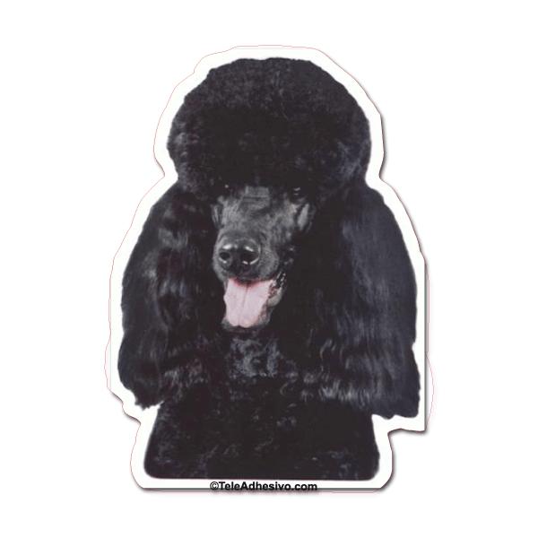 Aufkleber: Black Miniature Poodle
