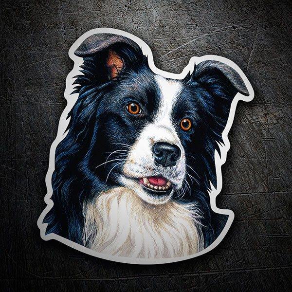Aufkleber: Border Collie