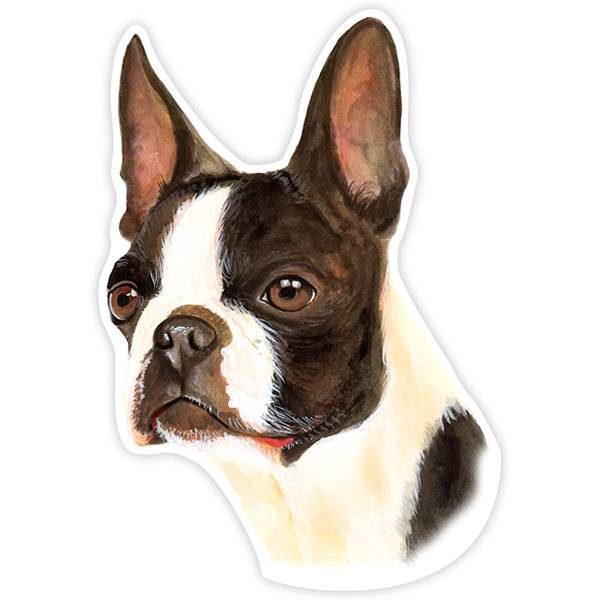 Aufkleber: Boston Terrier