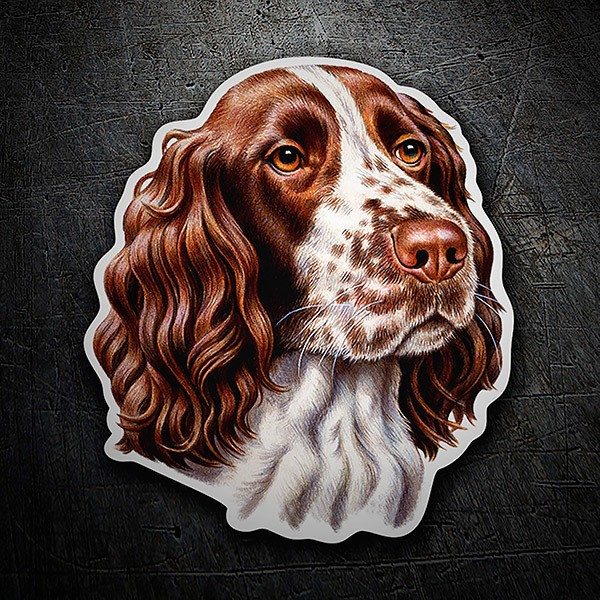 Aufkleber: Springer spaniel English