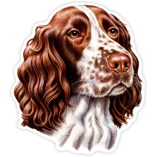 Aufkleber: English Springer Spaniel