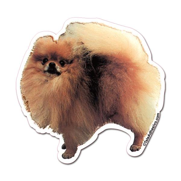 Aufkleber: Pomeranian