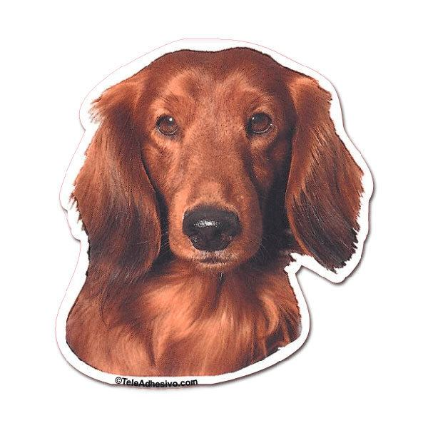 Aufkleber: Red Long-haired Dachshund
