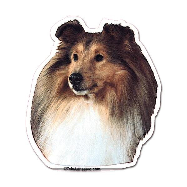 Aufkleber: Shetland Sheepdog