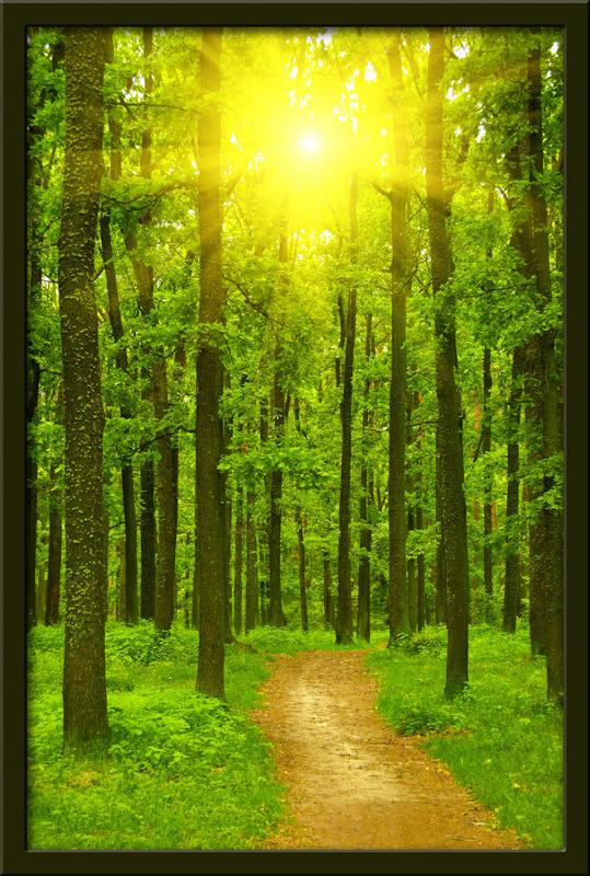 Wandtattoos: Straße in den Wald