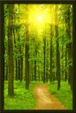 Wandtattoos: Straße in den Wald 3
