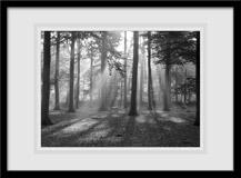 Wandtattoos: Wald Licht 3