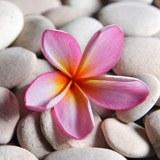 Fototapeten: Steine und Blumen 3