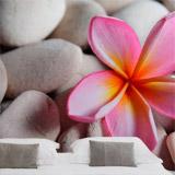 Fototapeten: Steine und Blumen 4