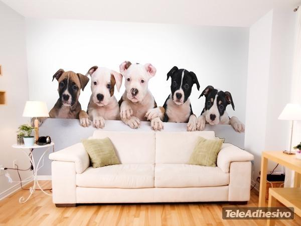 Fototapeten: Bulldogge Welpen